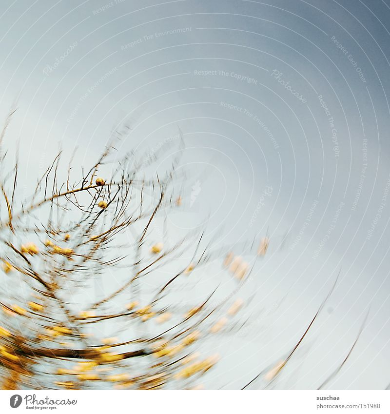 Nature Sky Tree Yellow Autumn Movement Branch Apple Agriculture Harvest Rotation Apple tree