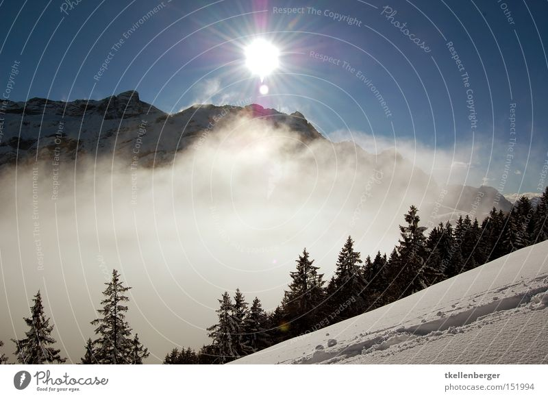 Mountain Dreamworld I. Sun Fog Snow Clouds Forest Back-light Beautiful Threat Go up Weather Sky Tracks Hiking Snow shoes Dream world Winter Winter sports