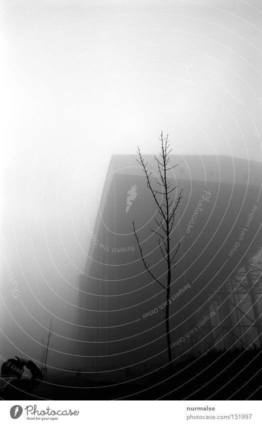 grey Gray Dread Fear Fog Eerie Hall Tree Man Loneliness Detective novel Crime thriller Film industry Analog Architecture Panic Black & white photo