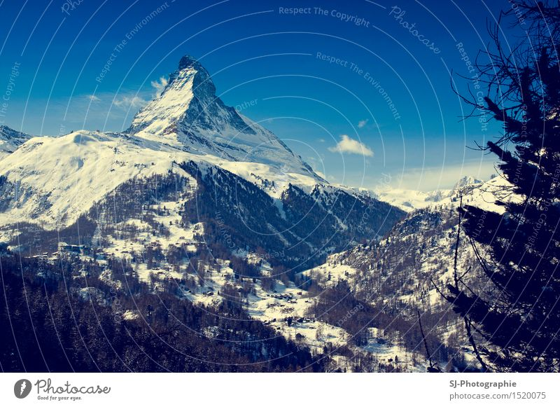 Matterhorn Switzerland Nature Landscape Cloudless sky Sun Sunlight Winter Beautiful weather Ice Frost Snow Tree Field Forest Alps Mountain Snowcapped peak