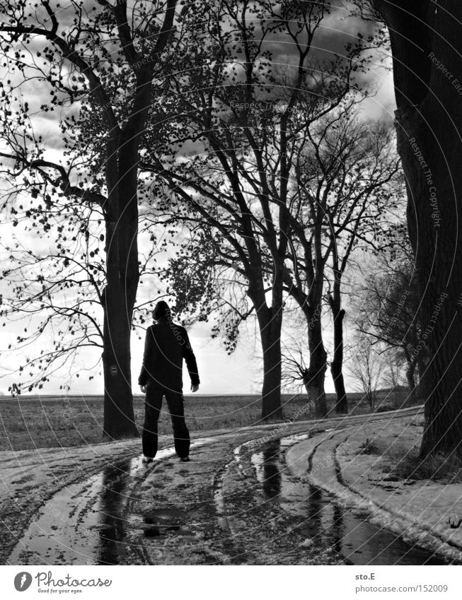 Human being Sky Tree Winter Clouds Street Cold Snow Lanes & trails Moody Hiking Gloomy Avenue Branchage