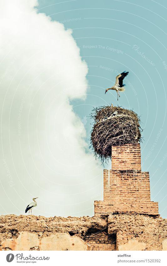 Arabian Dream VIII Morocco Orient vacation Tourism Marrakesh Stork