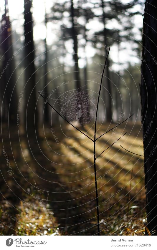 Wanted: web designer Environment Nature Sun Sunlight Beautiful weather Plant Tree Grass Forest Animal 1 Emotions Moody Spider Spider's web Net Catch Observe