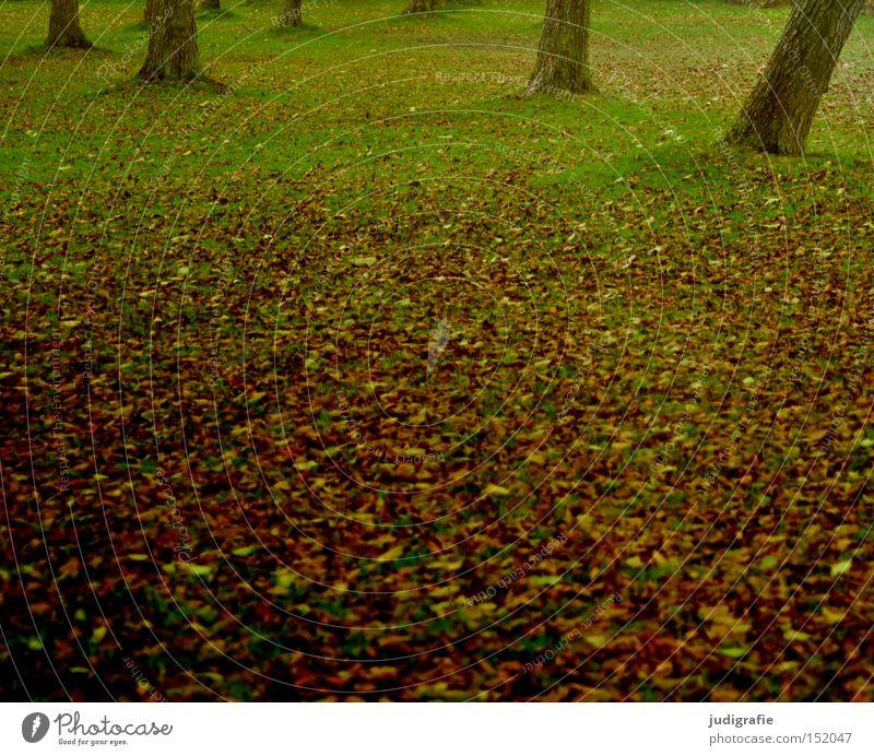 bathing island Meadow Tree Autumn Leaf Grass Tree trunk Deciduous tree Nature steinhude