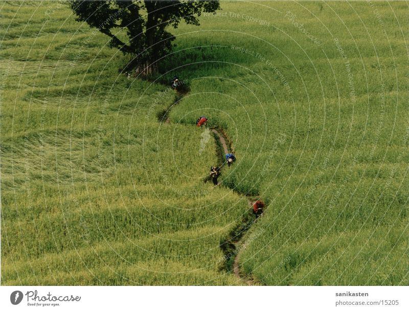 Human being Nature Mountain Landscape Field Nepal