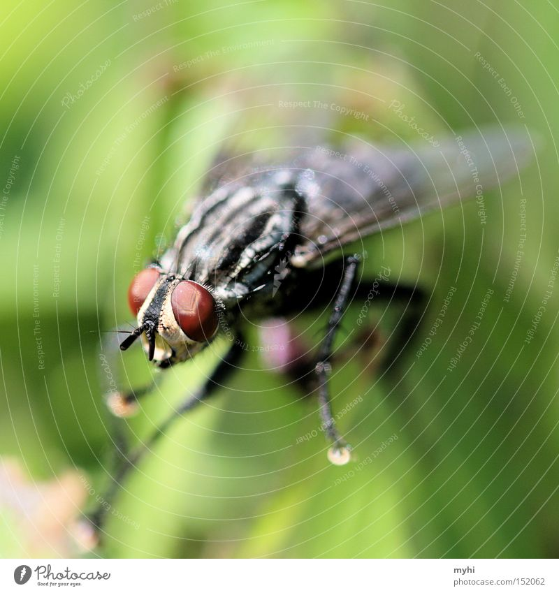 Red Eyes Fly Wing Yuck Animal Insect Compound eye Animal portrait Macro (Extreme close-up) Animal face