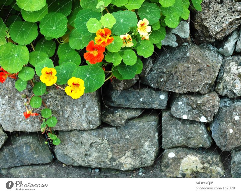 Nature Flower Blossom Herbs and spices Spring Garden Stone Wall (barrier) Growth Concentrate Craft (trade) Multicoloured Ireland Decent Northern Ireland Wayside