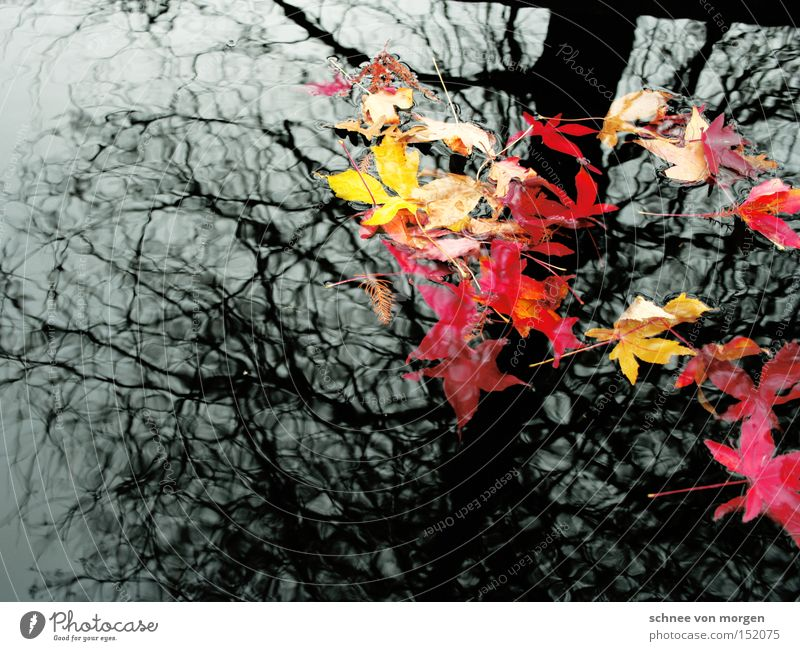 Nature Water White Tree Red Leaf Yellow Autumn Gray Lake Landscape Autumnal Autumnal weather Autumn wind
