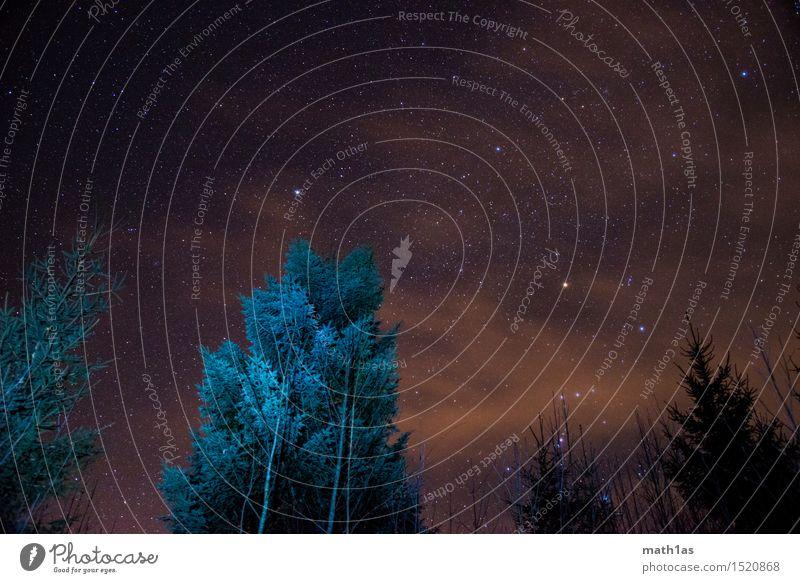 Sky Beautiful Tree Clouds Perspective Stars Night sky
