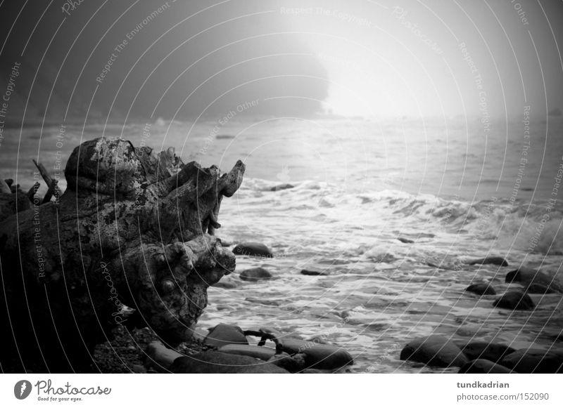 Chalk cliffs in fog Kreidefelsen Ocean Rügen Water Wood Fog Nature Baltic Sea Flotsam and jetsam Beach Waves Loneliness Gray Black Landscape