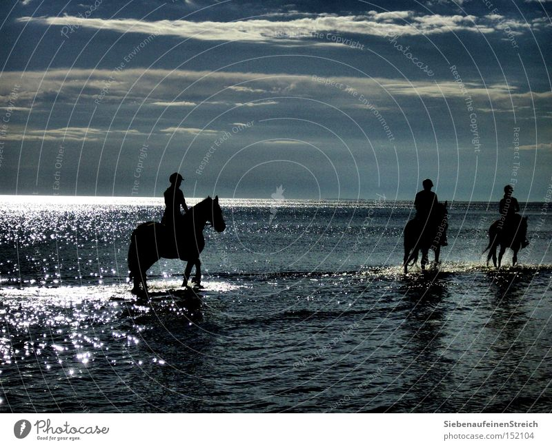 swell Horse Ocean Rider Longing Calm Sun Clouds Glittering Vacation & Travel Summer Relaxation Beach Horizon Water Blue sky Wanderlust Equestrian sports