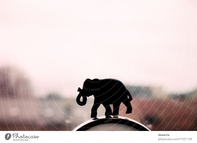 elephant igure Animal Joy Window Life Style Playing Lifestyle Freedom Party Moody Design Wild Living or residing Leisure and hobbies Elegant Decoration