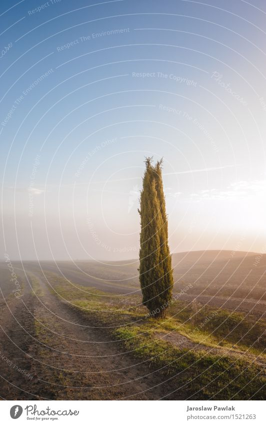 Tuscan cypress trees on the fields in a fantastic light Sky Nature Vacation & Travel Plant Blue Green Beautiful Summer Tree Sun Landscape Clouds