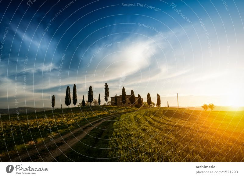 Farm in Tuscany Environment Nature Landscape Sky Grass Street Lanes & trails Green field country background Italy Majestic Sunset val d'orcia Exterior shot