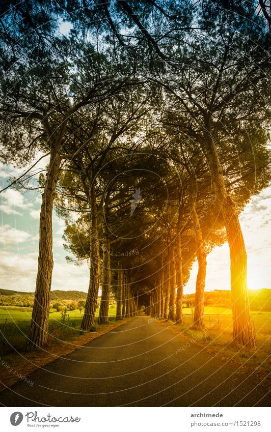 Street in the nature at sunset Beautiful Summer Sun Nature Landscape Plant Tree Lanes & trails Infinity Sunset country Country road Vertical way Majestic