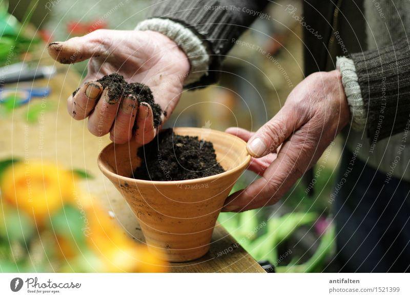 En few blomes flanze II Work and employment Profession Gardening Floristry Human being Masculine Male senior Man Grandfather Senior citizen Life Arm Hand