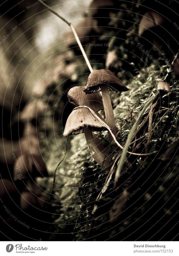 Nature Plant Autumn Ground Image Vegetable Stalk Mushroom Moss Poison