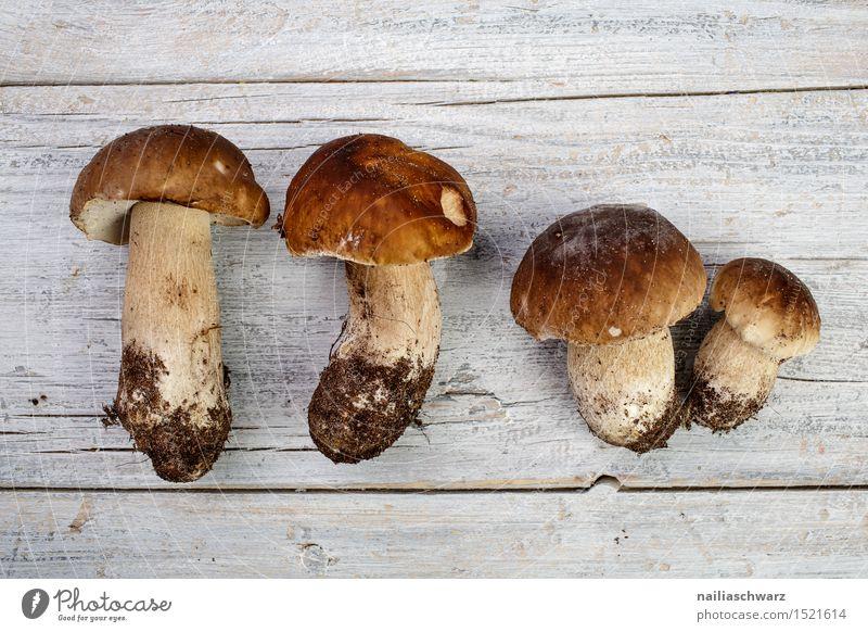Fresh porcini mushrooms from the forest Mushroom Boletus Hat Fragrance Brown spruce mushroom noble mushroom entirely Multiple handle forest mushroom Earth