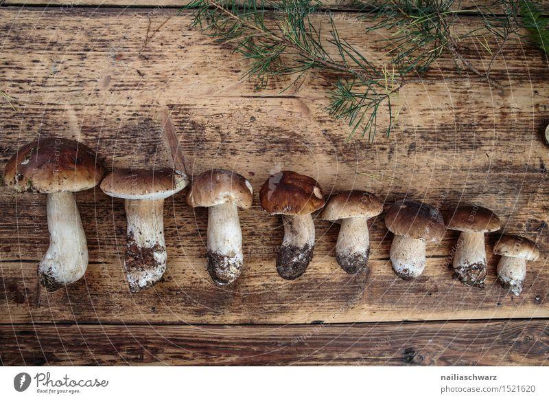 Fresh porcini mushrooms from the forest Food Nutrition Moss Leaf Hat Brown Boletus spruce mushroom noble mushroom entirely Multiple handle forest mushroom Earth