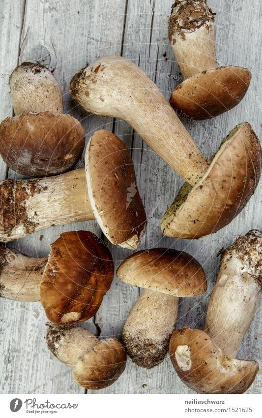 Fresh porcini mushrooms from the forest Food Nutrition Organic produce Vegetarian diet Moss Leaf Hat Fragrance Healthy Natural Beautiful Brown Gray To enjoy