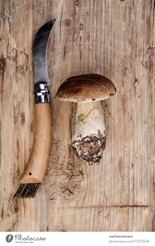 Fresh porcini mushrooms from the forest Food Nutrition Knives Moss Leaf Hat Fragrance Brown Boletus mushroom knife spruce mushroom noble mushroom entirely