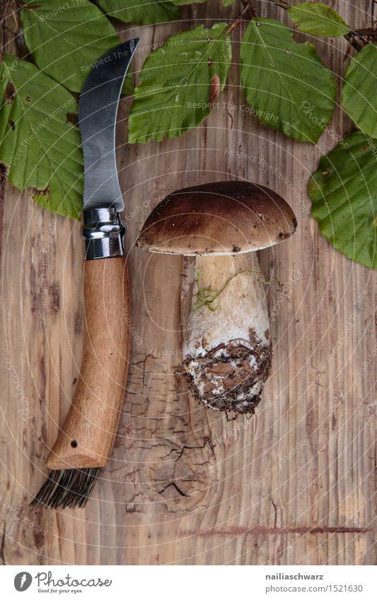 Fresh porcini mushrooms from the forest Food Nutrition Moss Leaf Hat Brown Green Boletus mushroom knife spruce mushroom noble mushroom entirely Multiple Knives