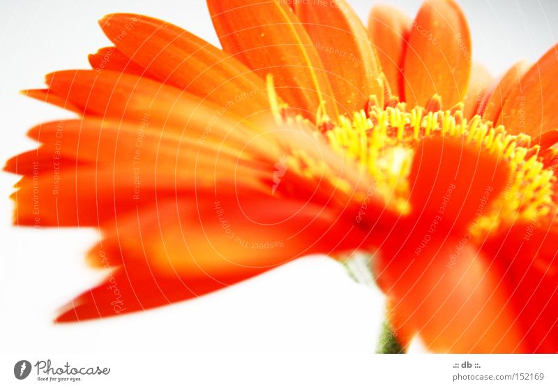 White Green Flower Yellow Spring Orange