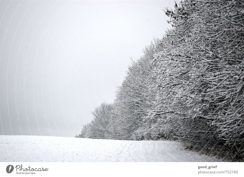 White Tree Winter Leaf Clouds Forest Snow Grass Gray Landscape Ice Hoar frost Row of trees