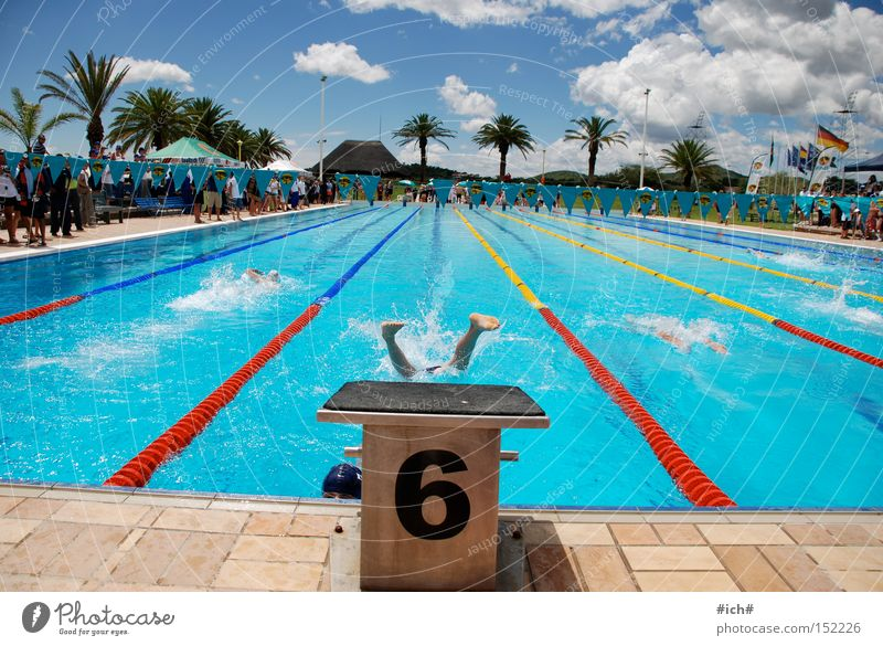 Six in water III Swimming pool Swimming trunks Springboard Water 6 Blue Clouds Palm tree Swimmer (professional sportsman) Beginning Sports Flying Head first