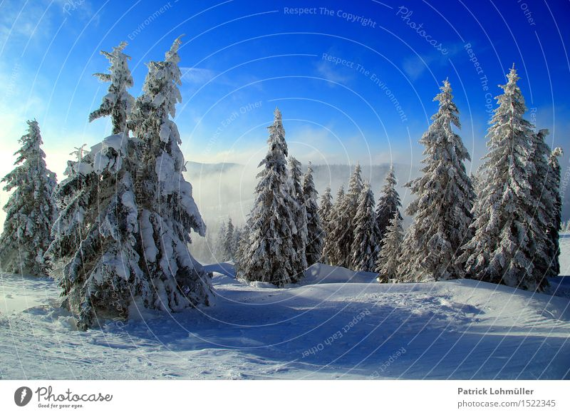 snow trees Vacation & Travel Tourism Snow Winter vacation Hiking Environment Nature Landscape Sky Clouds Beautiful weather Ice Frost Snowfall Tree Mountain