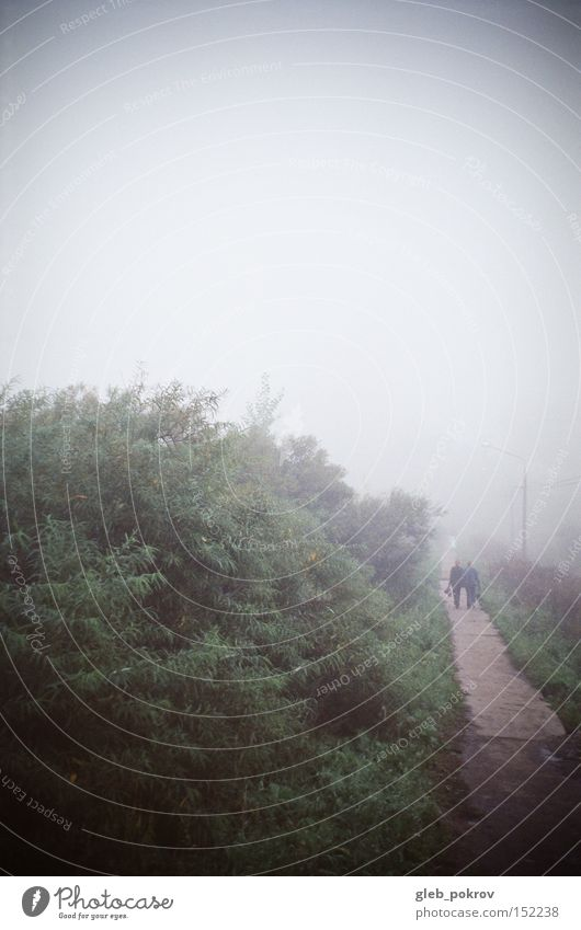 Fog. Human being Sky White Green Flower Street Blossom Weather Russia Siberia Fogged over