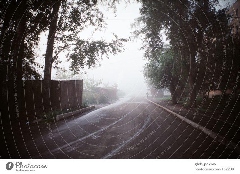 fog. Human being Sky White Green Flower Street Autumn Blossom Weather Fog Russia Siberia Fogged over