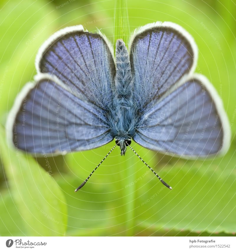 Nature Blue Green Beautiful Summer Relaxation Animal Environment Spring Natural Exceptional Flying Elegant Wild animal Esthetic Joie de vivre (Vitality)