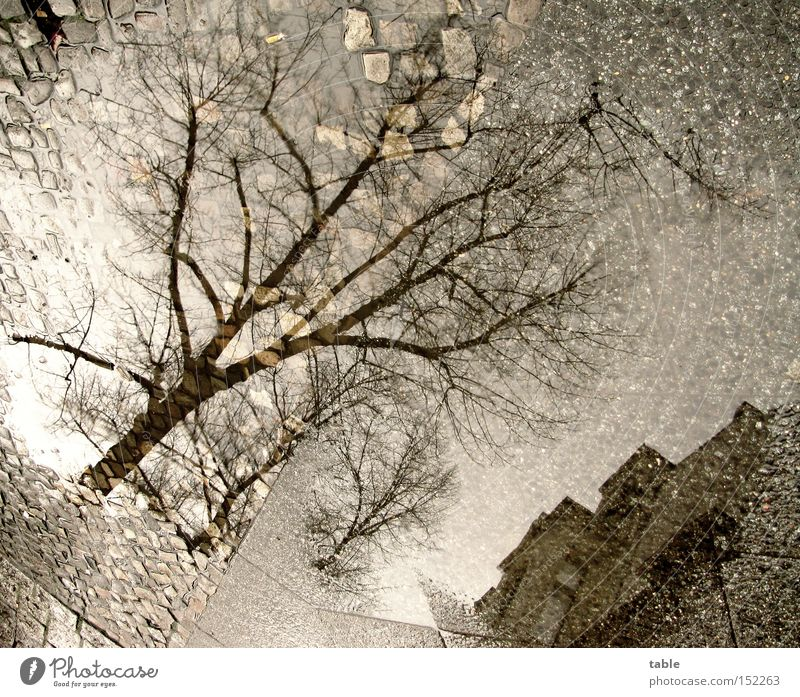 White Christmas Water Puddle Sidewalk Tree House (Residential Structure) Stone Cold Gray Dark Comfortless Weather Winter Traffic infrastructure Sky Reflection