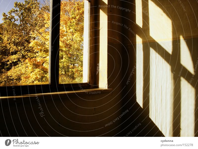 Loneliness House (Residential Structure) Autumn Window Time Room Living or residing Transience Derelict Nostalgia Staircase (Hallway) Villa Classical