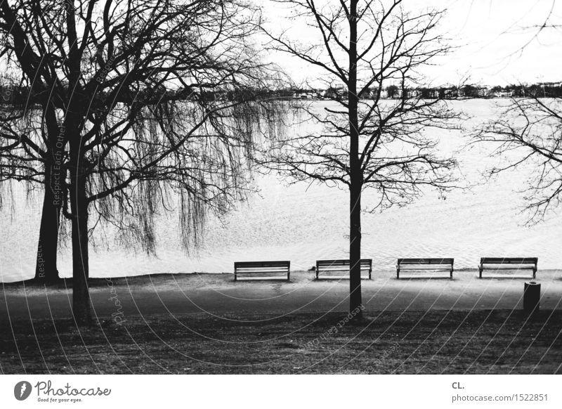 Alster Environment Nature Landscape Water Autumn Winter Tree Meadow Lake River Hamburg Bench Trash container Break Calm Black & white photo Exterior shot