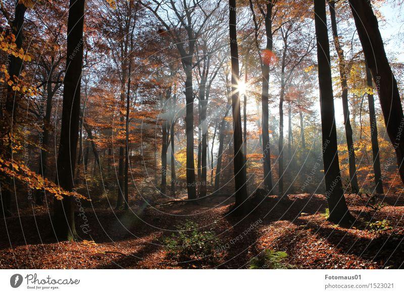 Nature Blue Tree Sun Landscape Forest Yellow Autumn Brown Moody Orange Beautiful weather