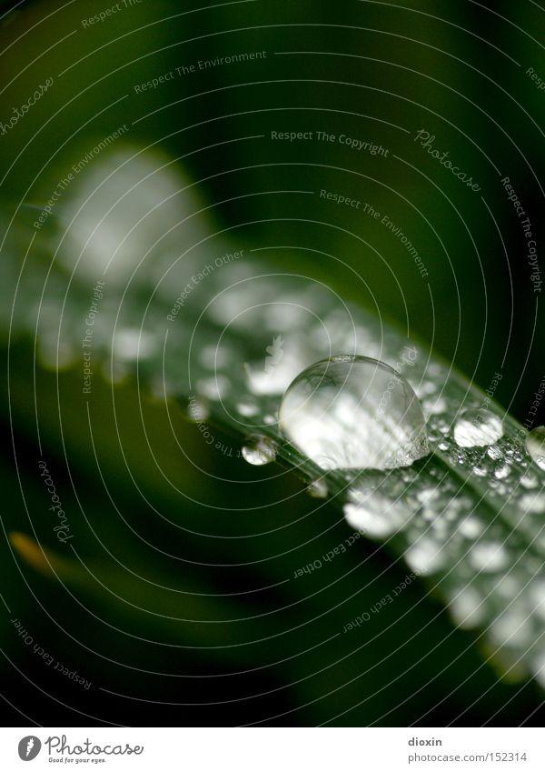 Nature Water Green Meadow Grass Wet Drops of water Damp Blade of grass