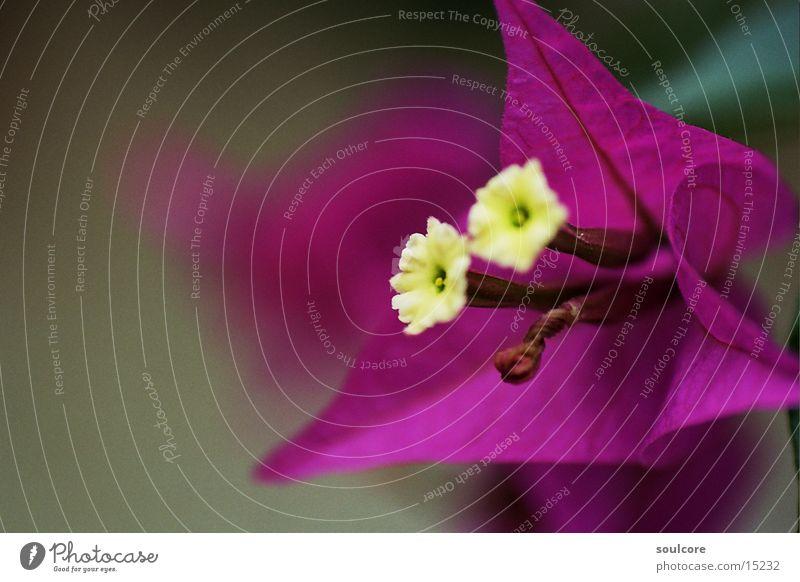 contrast flower Flower Violet Blossom Nature