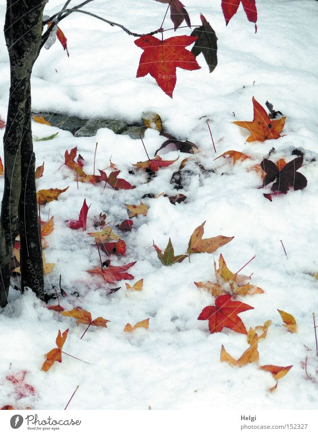 Nature Tree Red Winter Leaf Black Yellow Cold Snow Garden Park Brown Transience Tree trunk Twig December