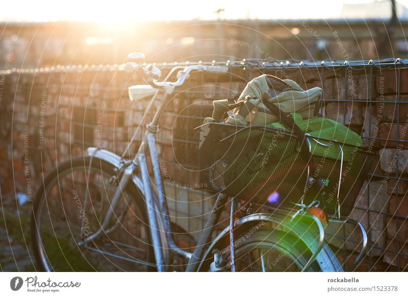 Bicycle in backlight Cycling tour Relaxation Experience Leisure and hobbies Lens flare Exterior shot Evening Sunlight Back-light Shallow depth of field
