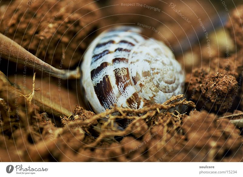 Nature Autumn Transport Earth Snail Macro (Extreme close-up) Snail shell