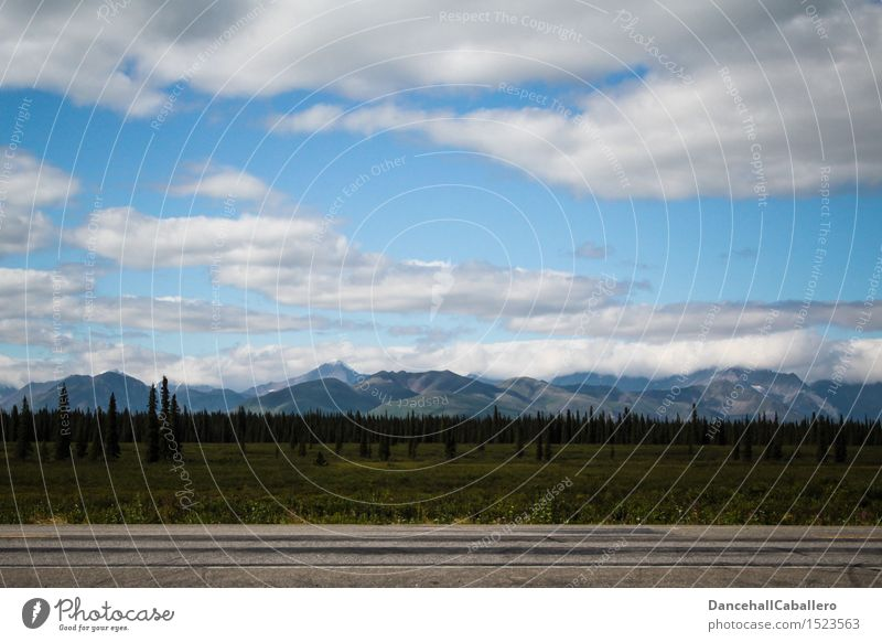 On the road in Alaska... Vacation & Travel Adventure Summer vacation Nature Landscape Sky Clouds Horizon Beautiful weather Tree Grass Bushes Meadow Forest