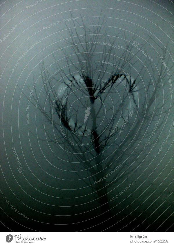 mist heart Heart Tree Winter Fog Gray Rain Branch Love Dreary Transience foggy grey Sadness
