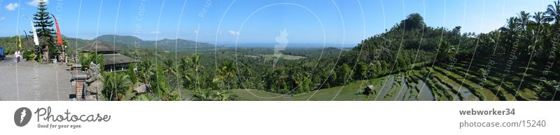 Nature Landscape Large Horizon Indonesia Agriculture Palm tree Terrace Panorama (Format) Rice Field Bali Los Angeles Paddy field