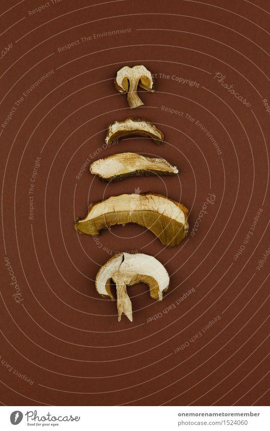 mushroom pile Art Work of art Esthetic Mushroom Dried Brown Forest Woodground Forest plant Symmetry Design Arranged Graphic Delicious Herbs and spices