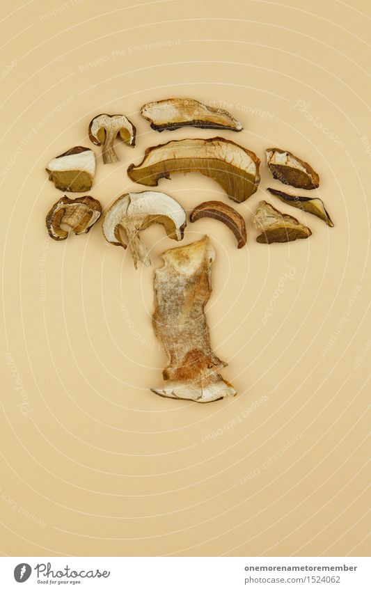 mushroom fungus Art Work of art Esthetic Mushroom Mushroom cap Mushroom picker Beatle haircut Mushroom soup Collector Boletus Delicious Herbs and spices Dried