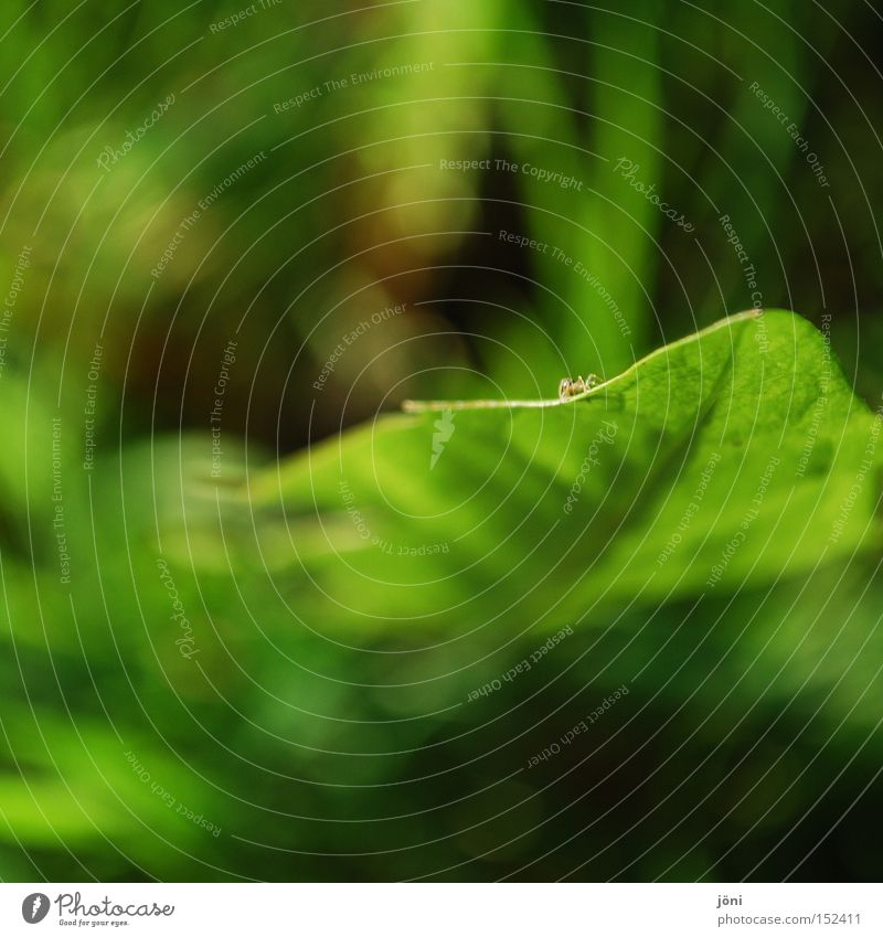 Nature Green Plant Calm Far-off places Relaxation Meadow Small Concentrate Dandelion Spider Accuracy Diminutive