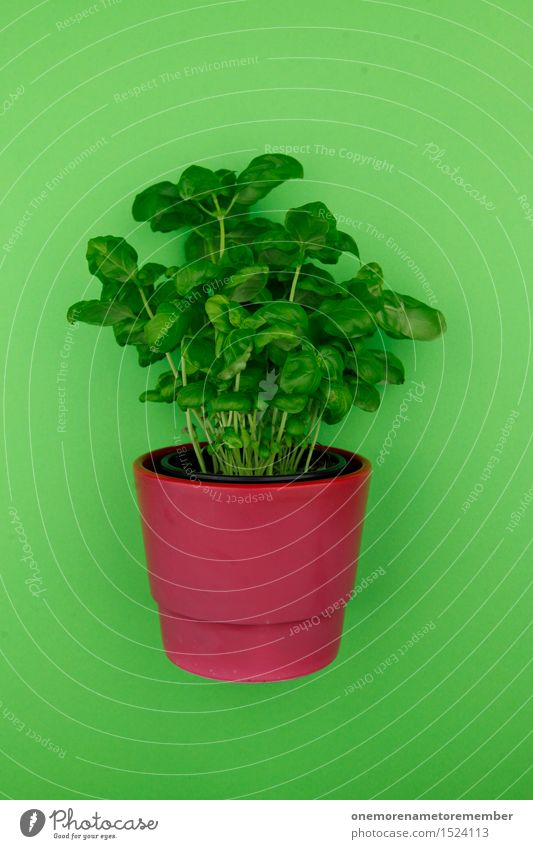 With wort 2 Art Work of art Esthetic Herbs and spices Basil Basil leaf Green Foliage plant Pot Pot plant Red Flowerpot Design Graphic Ecological Organic produce