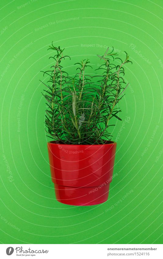 With wort 1 Art Work of art Esthetic Herbs Rosemary Herbs and spices Green Healthy Eating Delicious Kitchen Red Pot Pot plant Flowerpot Plant Foliage plant